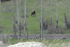 phoca_thumb_l_wildlife_bear 071 1