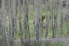 phoca_thumb_l_wildlife_bear 080 1