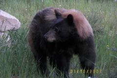 phoca_thumb_l_wildlife_heathersbear